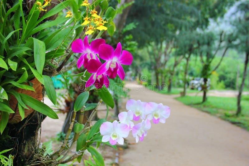Orchideen, Die Auf Einem Baum Wachsen Stockfoto - Bild von weiß ...
