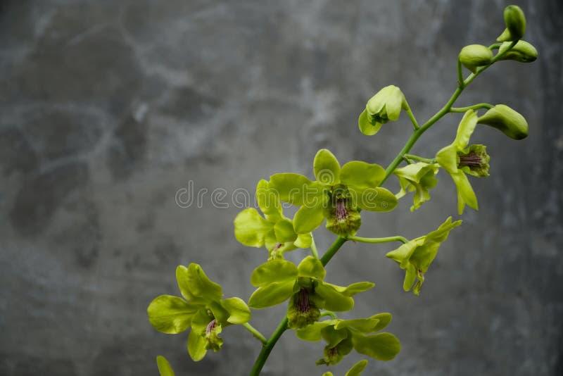 Orchideen, die in der Blüte sind stockfoto