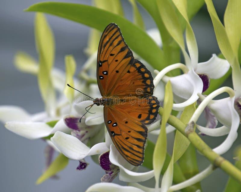 Orchideen-Landung lizenzfreies stockfoto