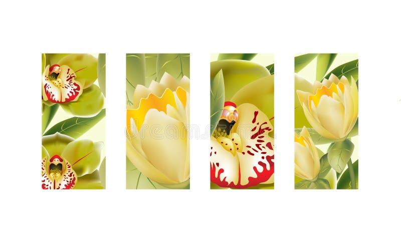 Orchideen und gelbe Tulpen stock abbildung