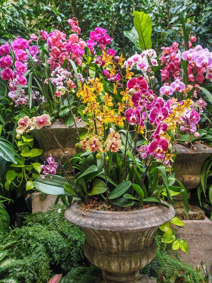 Orchideenanordnung in den Steinvasen lizenzfreies stockbild