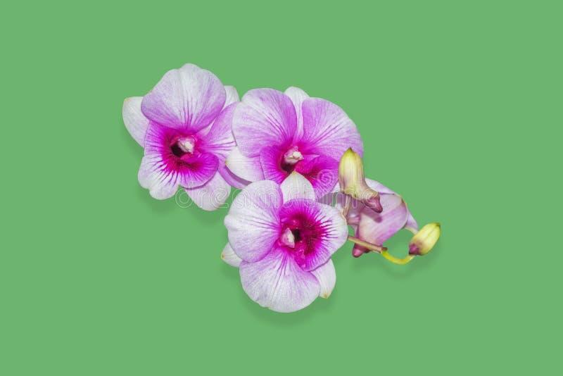 Orchideenblume lokalisiert auf Grün, Beschneidungspfad stockfotos