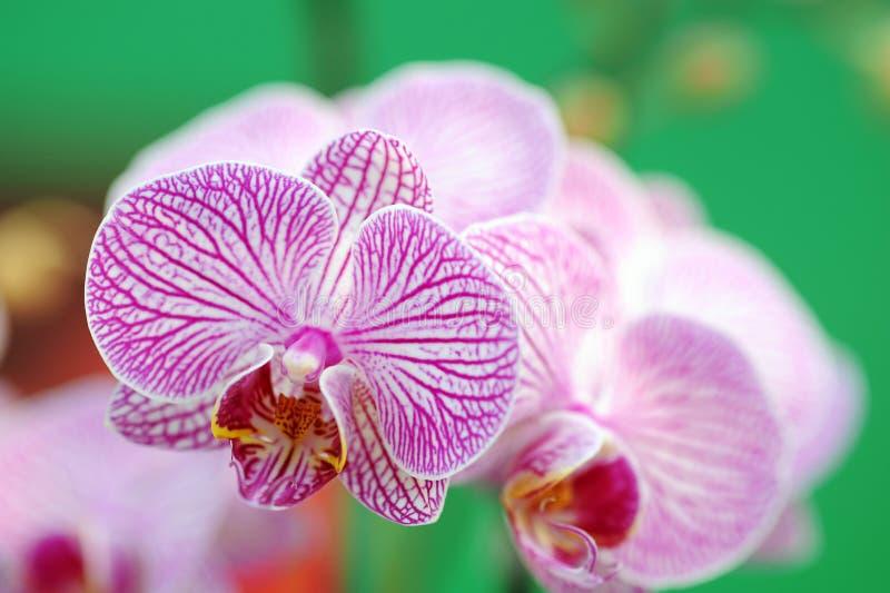 Orchideenblumen stockfotografie
