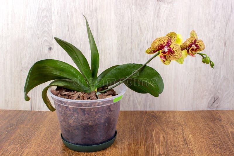 Orchideenblumen auf dem Holz stockbild