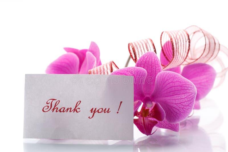 Orchideenblumen mit Dankbarkeit stockbilder