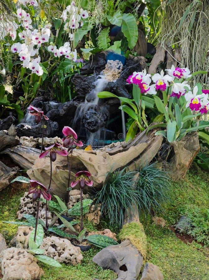 Orchideengarten lizenzfreie stockfotos