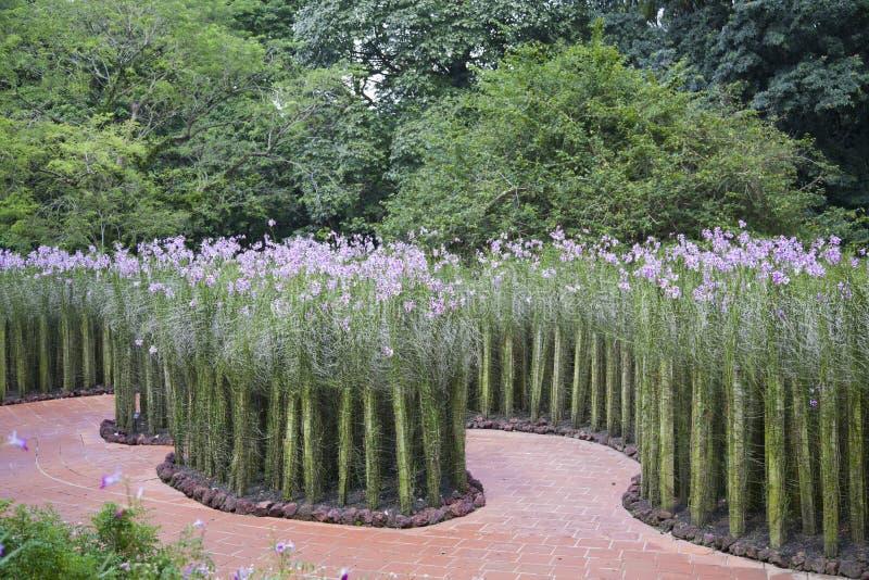 Orchideetuin royalty-vrije stock foto