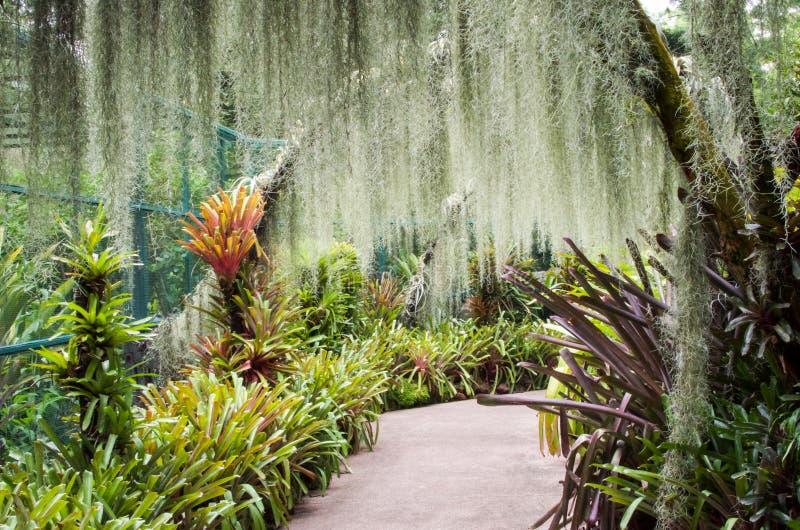 Orchideetuin, een deel van Botanische Tuinen in Singapore royalty-vrije stock afbeeldingen
