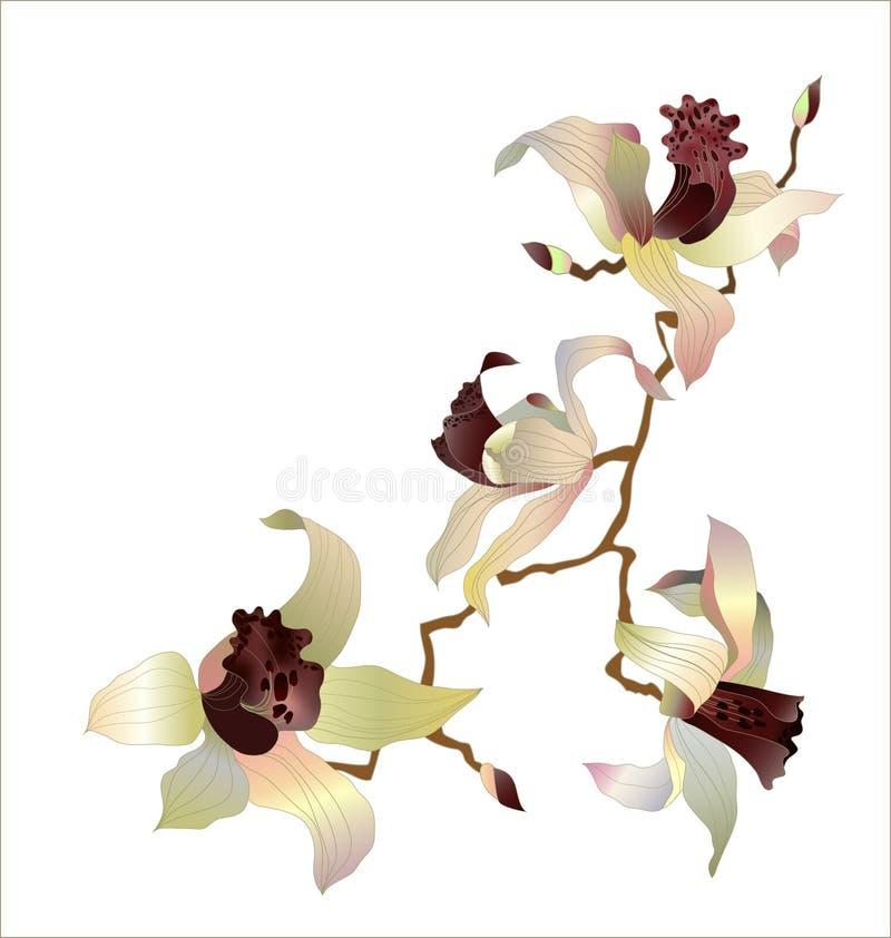 Orchideezweig lizenzfreie abbildung
