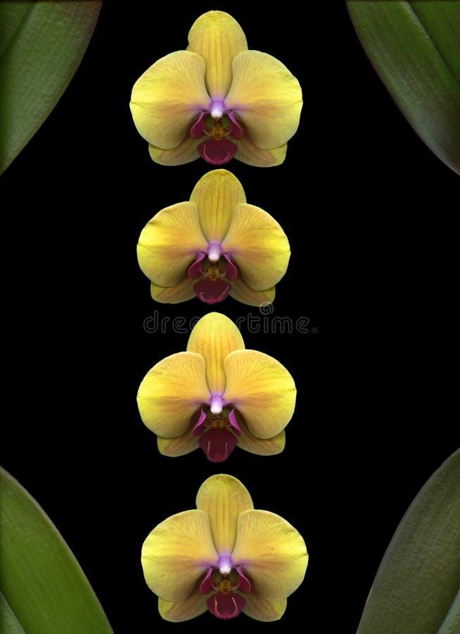 orchidei kolor żółty obrazy stock