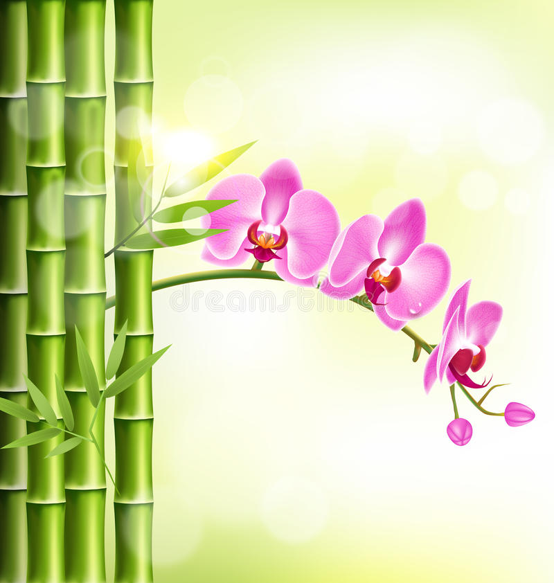 Orchidei menchia kwitnie z bambusem i światłem słonecznym na jasnozielonym royalty ilustracja