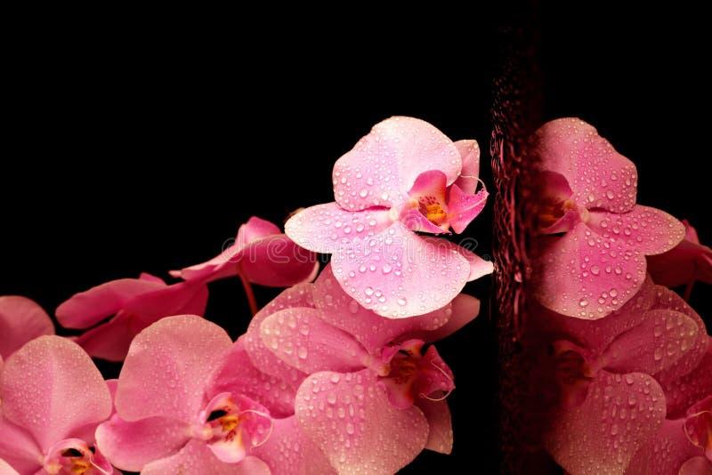 orchidei piękne menchie zdjęcia stock