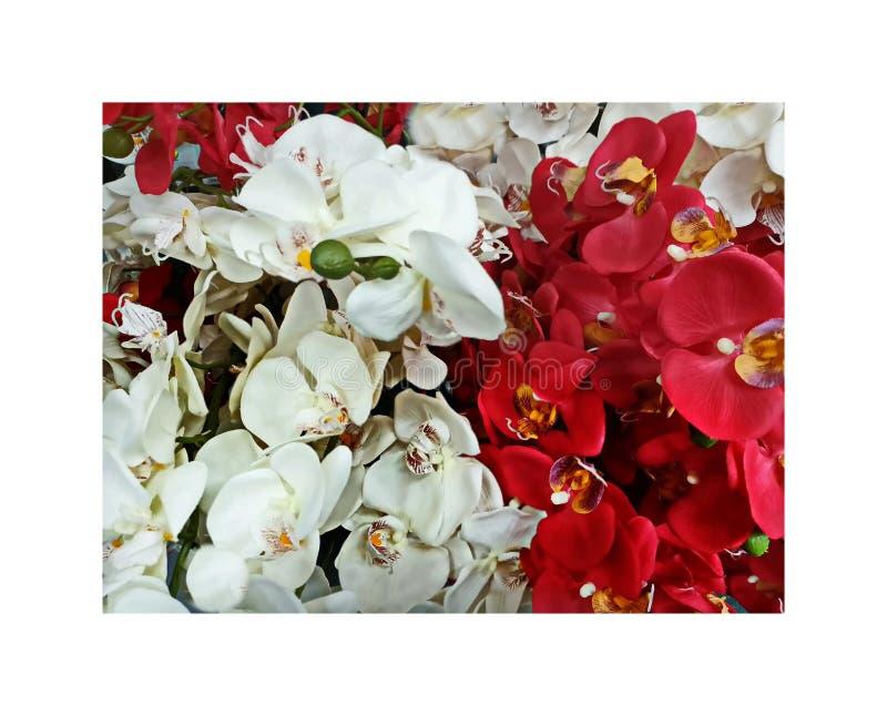 Orchidei rewolucjonistka i Biały kwiatów tła dekoracja projektuje abstrakcjonistyczną sztukę, kwiatu wystrój dla domu, kartka z p zdjęcie royalty free