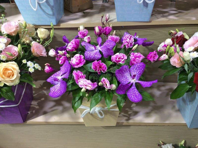 Orchides dla sprzedaży w ogródu sklepie moscow Rosji fotografia royalty free
