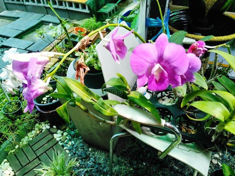 Orchidgarden purpury na krześle fotografia royalty free