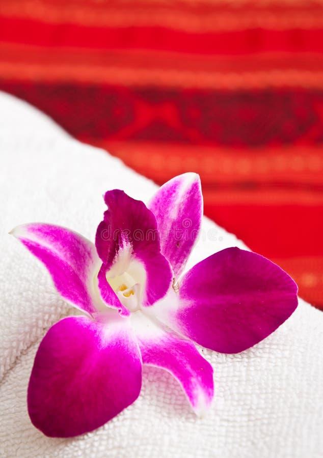 orchidhanddukwhite royaltyfri bild
