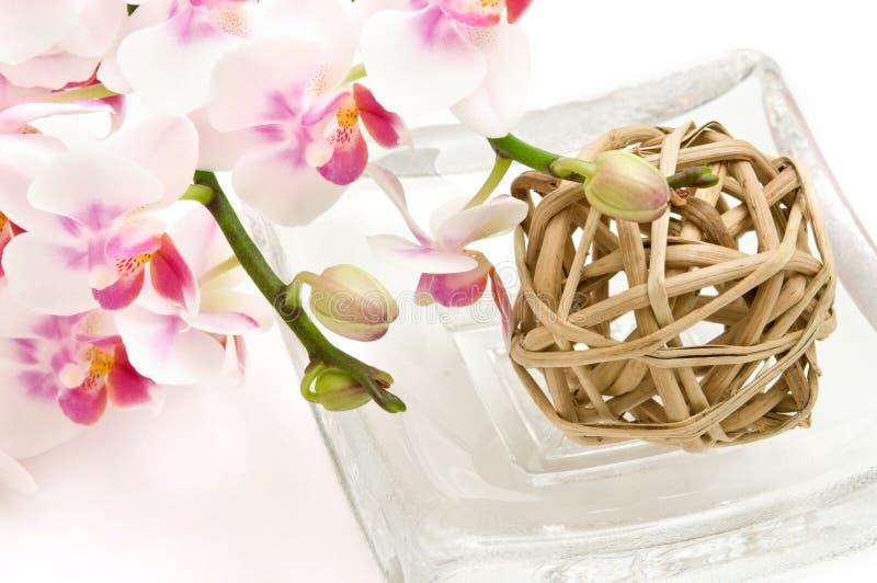 orchids άνθησης ρόδινο λευκό στοκ εικόνα με δικαίωμα ελεύθερης χρήσης