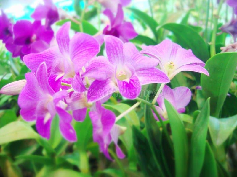 orchids τροπικά στοκ εικόνες
