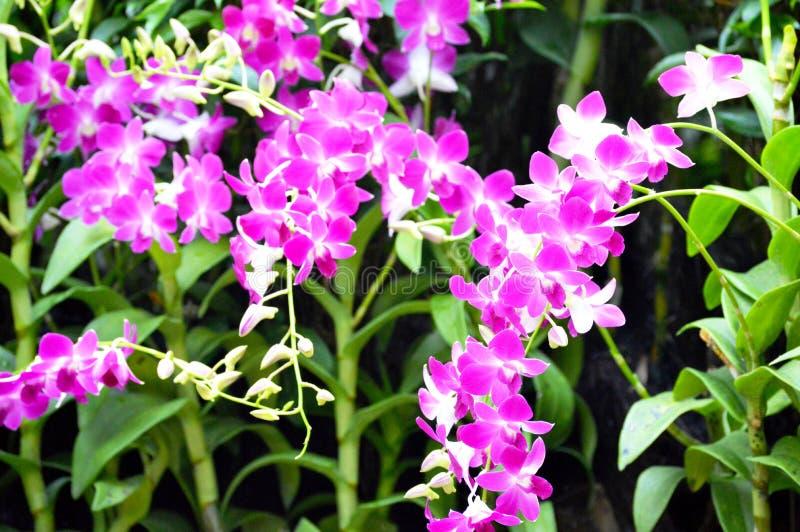 orchids arkivfoto