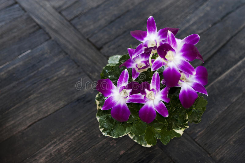 Download Orchids stock photo. Image of wooden, green, background - 11734300