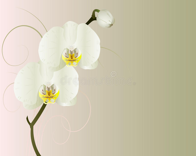 Download Orchids. Stock Photo - Image: 18753230