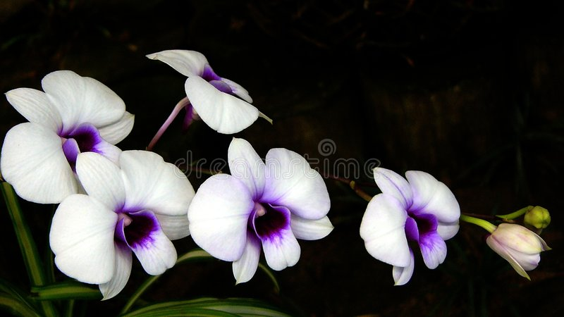 Download Orchids stock image. Image of purple, orchid, beautiful - 20161