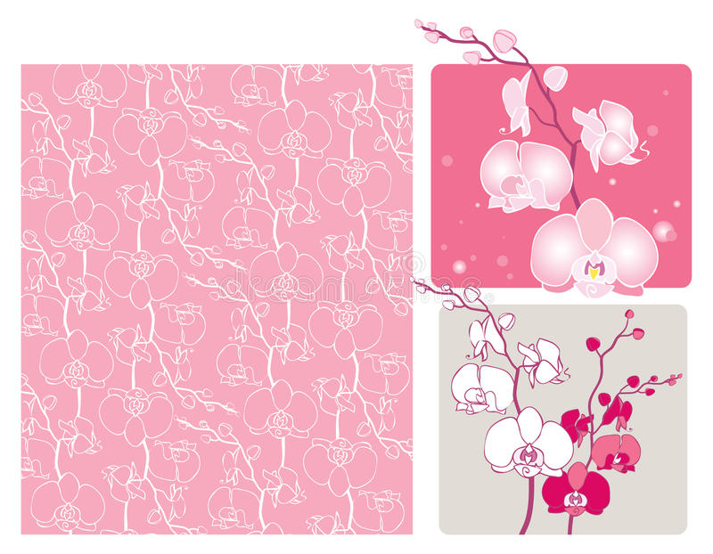 Download Orchids stock vector. Image of decorative, blossom, elegant - 24359145