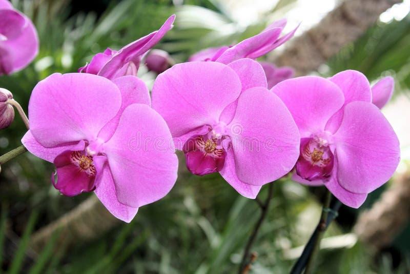 orchids arkivbilder