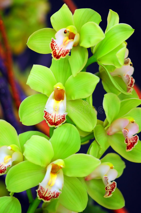 Download Orchids stock photo. Image of blossom, fresh, crowd, tropical - 6045124