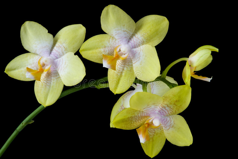 Download Orchids stock photo. Image of beautiful, petal, white - 8196120