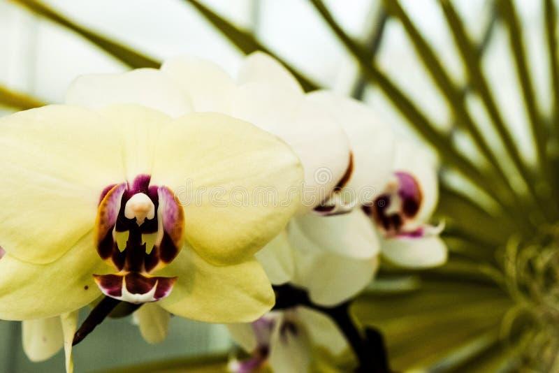 orchids στοκ φωτογραφία
