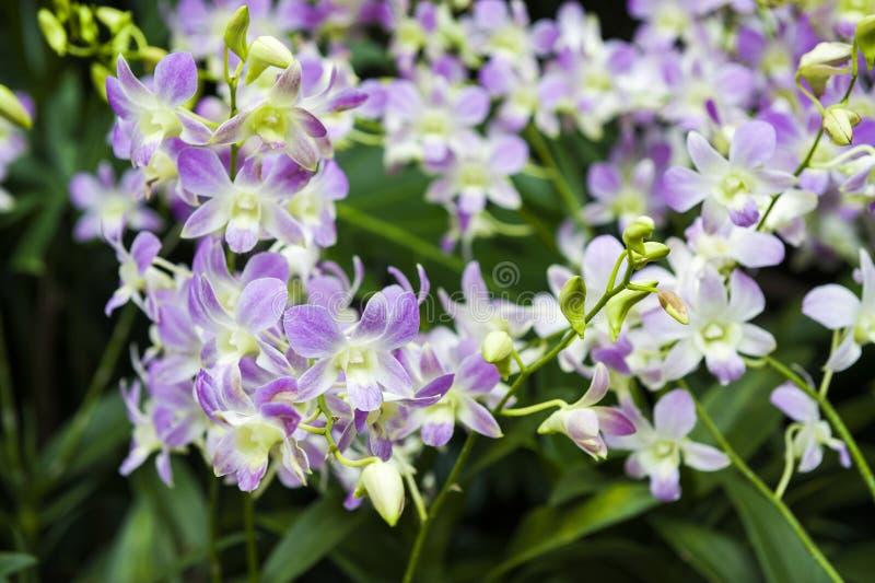 orchids fotos de stock royalty free