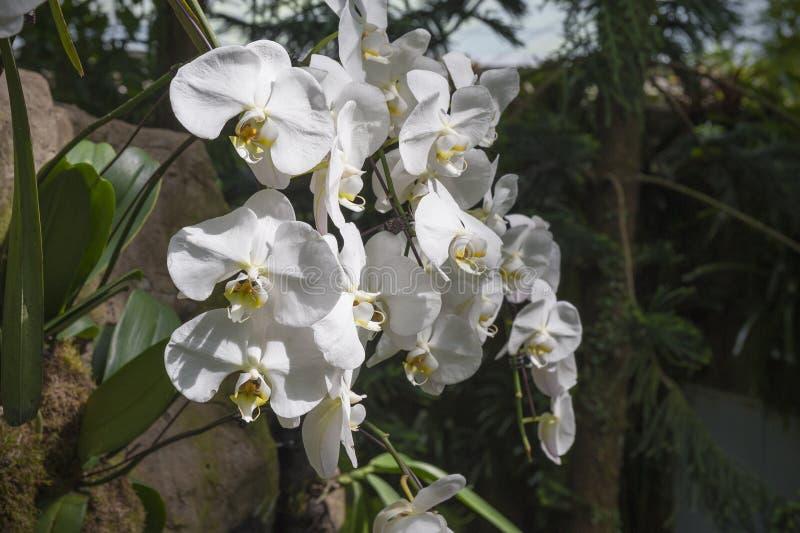 orchids foto de stock