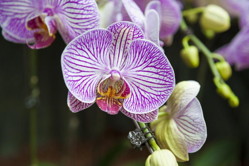 orchids foto de stock royalty free