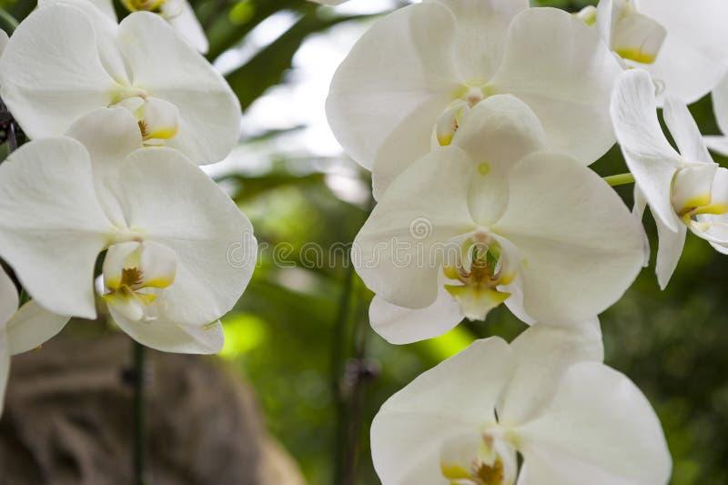 orchids imagem de stock