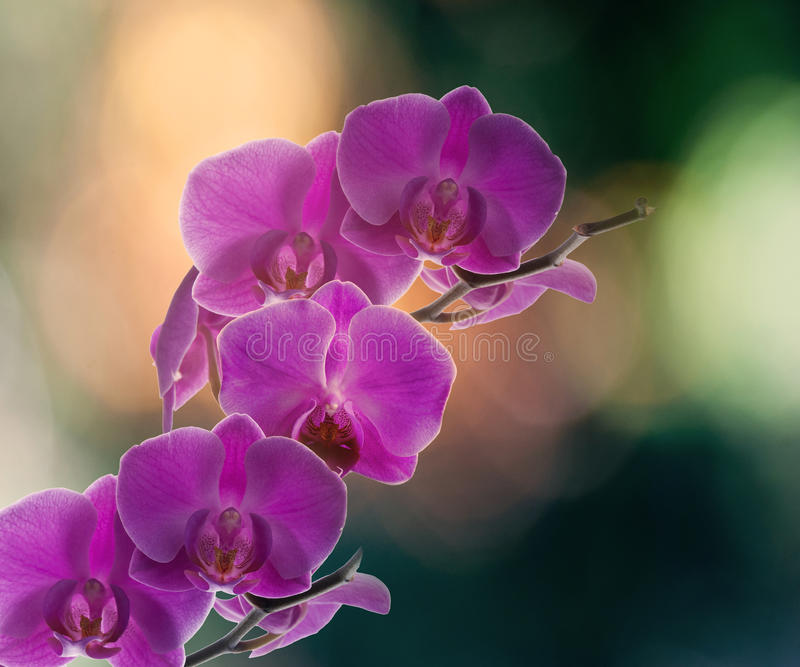 Orchids on a beautiful background stock photos
