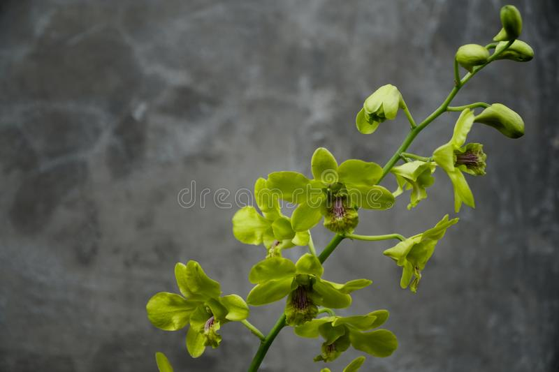 Orchids that are in bloom. Nature, art, indonesia, green, flower, beautiful, wonderful stock photo