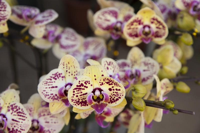 Orchids blossom stock images
