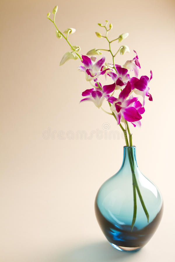 Orchids in blue vase on background stock photo