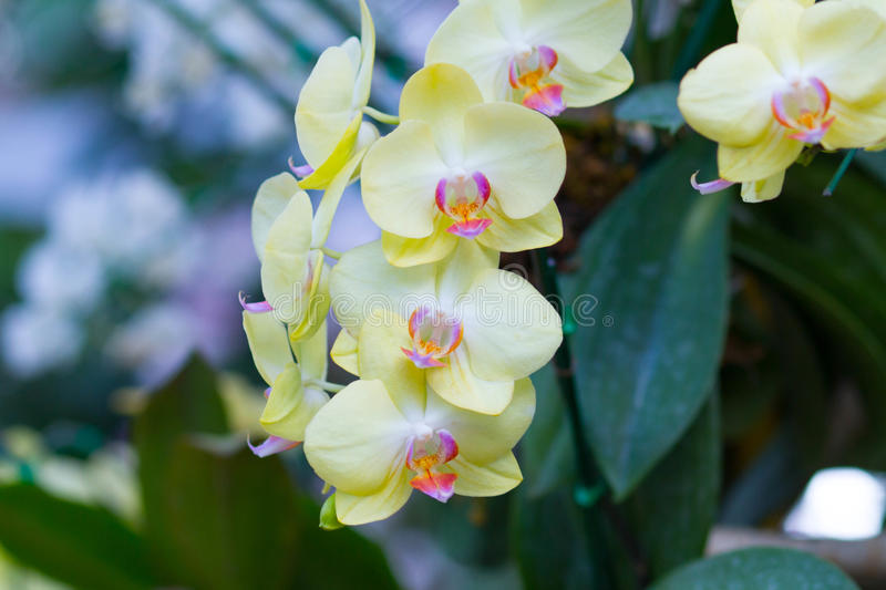 Orchids flowers. In the field royalty free stock photos