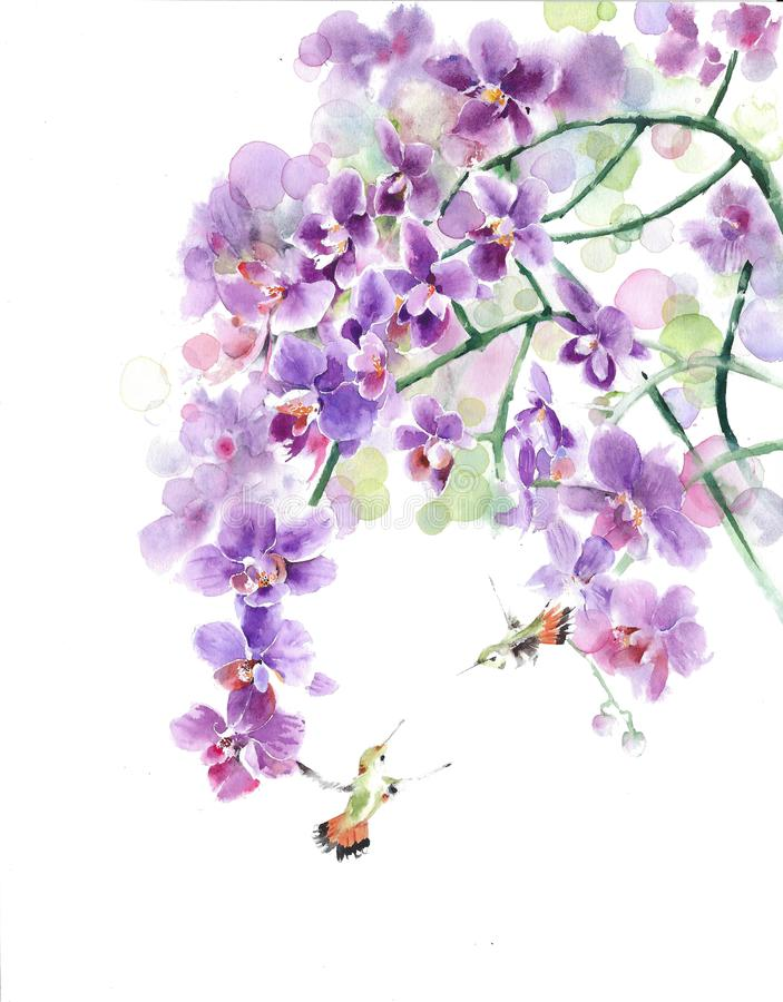 Orchids flowers hummingbirds tropical flowers tropical birds watercolor painting illustration isolated on white background stock images