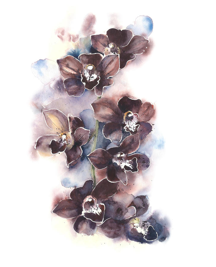 Orchids the flowers tropical flowers watercolor painting illustration isolated on white background greeting card. Orchids the flowers tropical flowers watercolor stock illustration