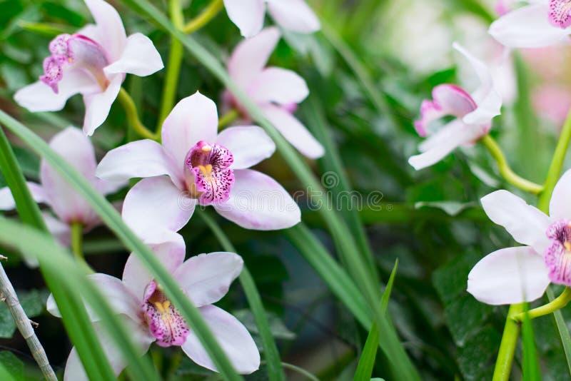 Orchids in a garden stock photos