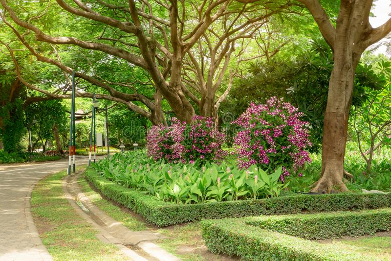 Orchids garden in a park, Pink Dendrobium hybrid orchid blossom on the trees, pink Siam tulip or Summer tulips and flowering plant stock images