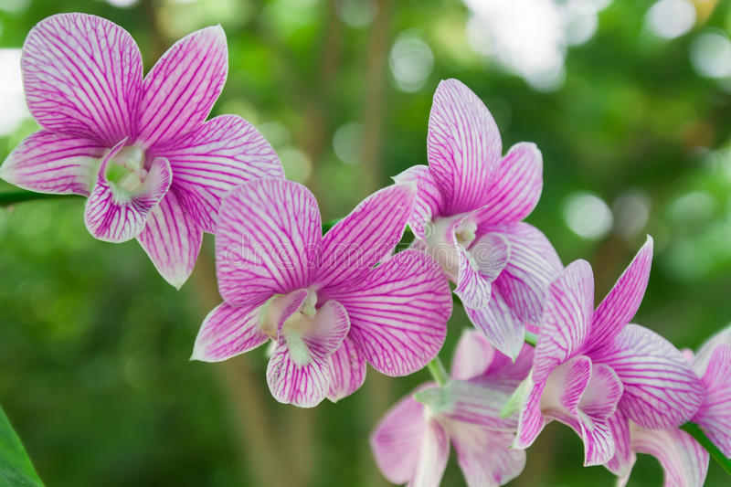 Orchids. And green bokeh.nature background stock photo