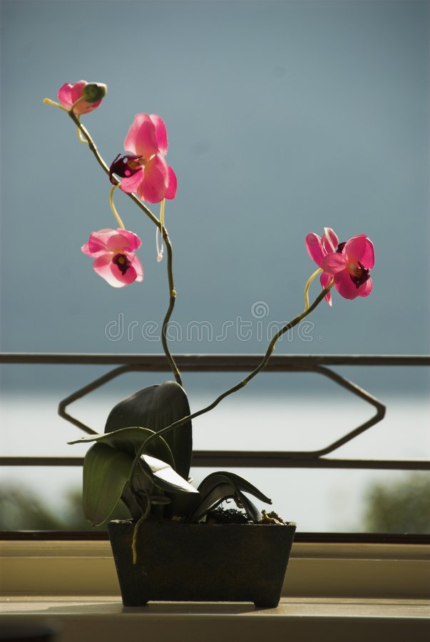Orchids in the light royalty free stock images