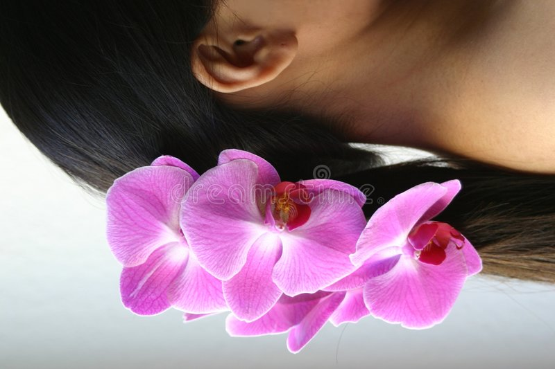 Orchids and ponytail stock image