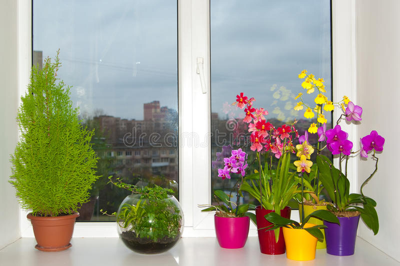 Download Orchids in the pots stock photo. Image of green, life - 28977180
