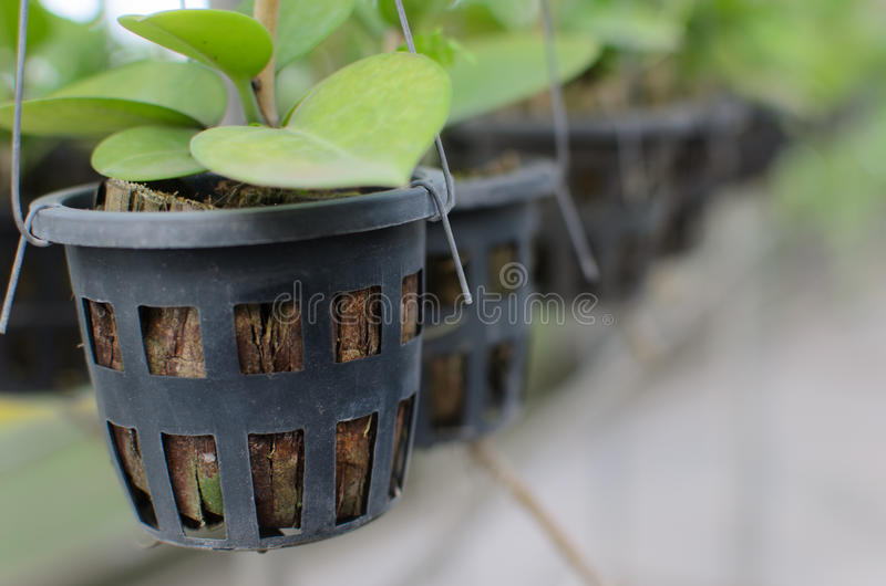 orchids potted 库存照片
