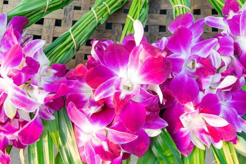 The orchids that are prepared on the wicker. For texture backgrounds stock images